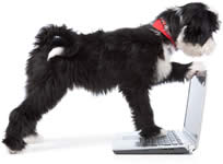 dog looking over computer with one paw on the keyboard