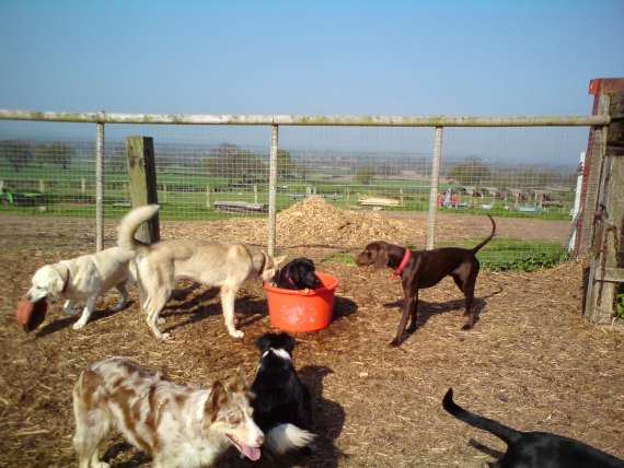dog kennels services