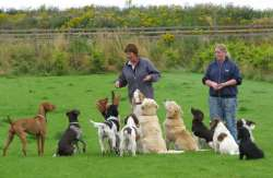 Dog Walks at the Boarding Kennels
