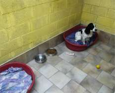 Boarding Kennels Sleep Accommodation