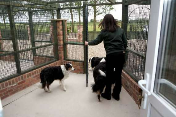 kennels exercise