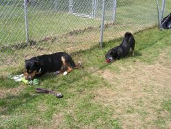 Exercise & Play in Boarding Kennels